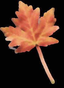 blatt01B 191x300 1