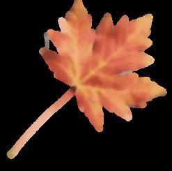 blatt01C 191x300 1